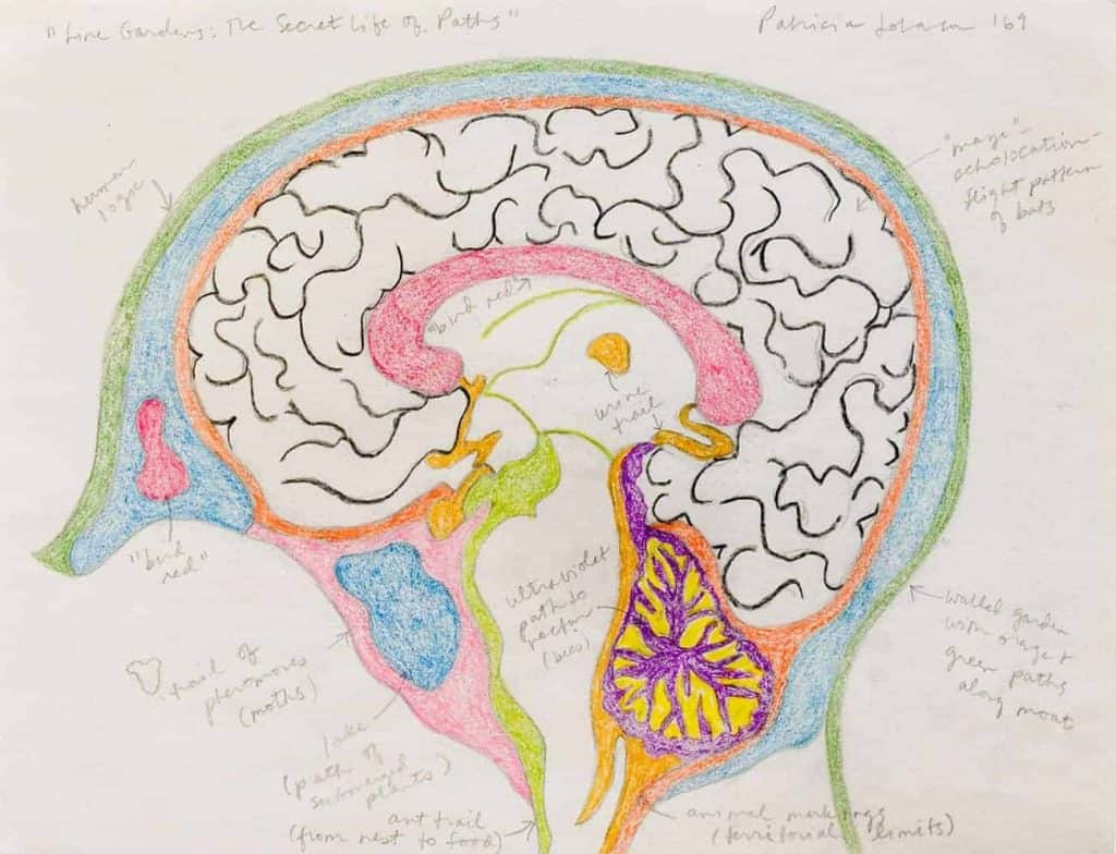 Soft colored pencil drawing of a brain. small hand written lables point to various areas. These things are written in cursive.