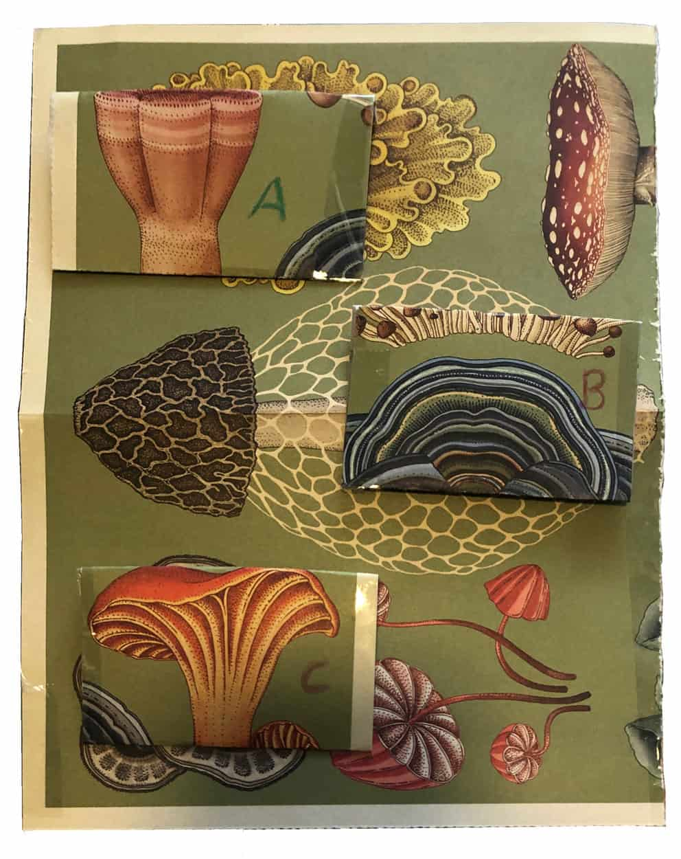 collage of botanical illustrations of mushrooms